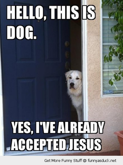 hello dog animal answering door yes accepted jesus christ already funny pics pictures pic picture image photo images photos lol