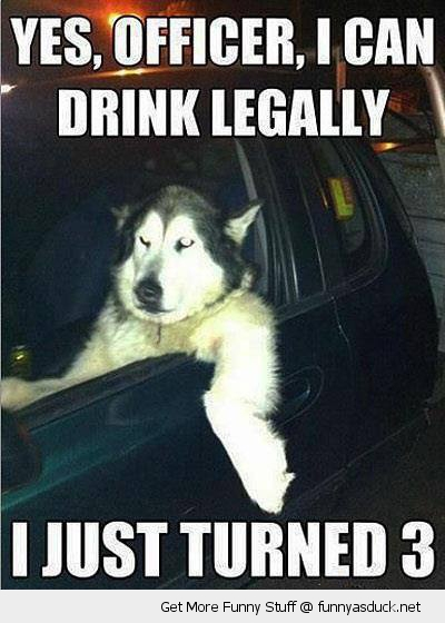 Yes officer drink legally dog animal driving car funny pics pictures