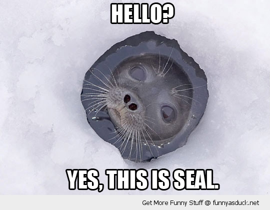 hello this is seal ice hole water cute animal funny pics pictures pic picture image photo images photos lol