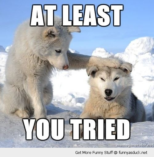 least you tried wolf dog snow animal patting head funny pics pictures pic picture image photo images photos lol