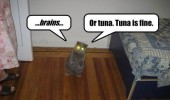 zombie cat brains lolcat animal tuna glowing eyes funny pics pictures pic picture image photo images photos lol