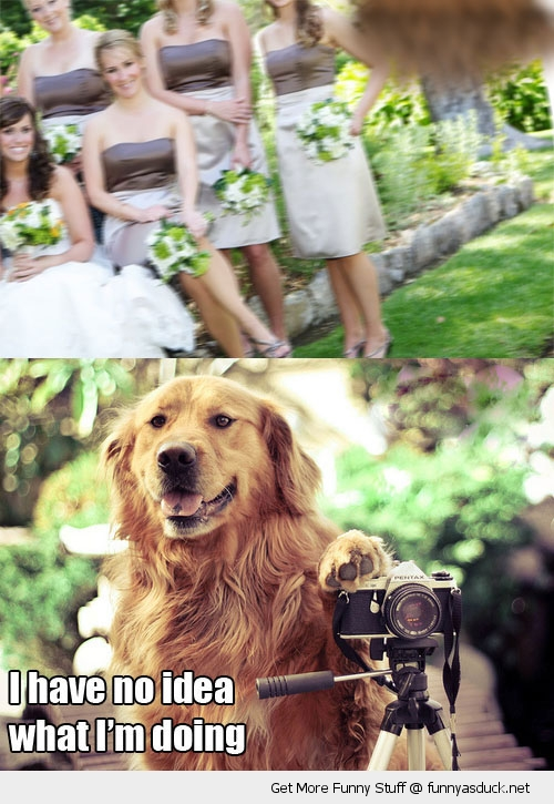 wedding photographer dog animal no idea what I'm doing funny pics pictures pic picture image photo images photos lol