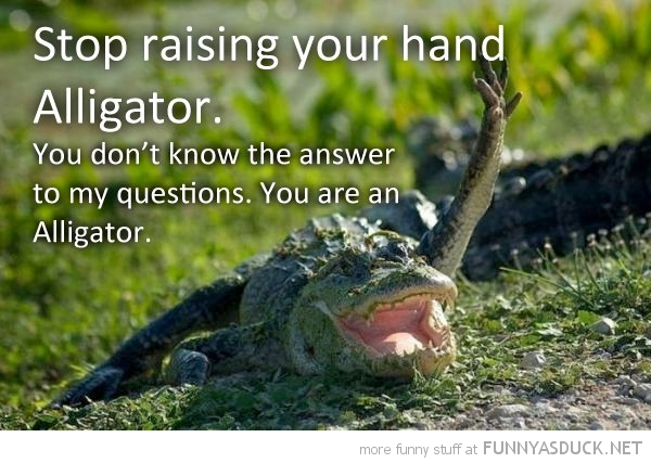 alligator raising hand don't know answer animal funny pics pictures pic picture image photo images photos lol