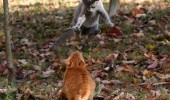 cat animal lolcat almost ran over invisible bike jumping funny pics pictures pic picture image photo images photos lol