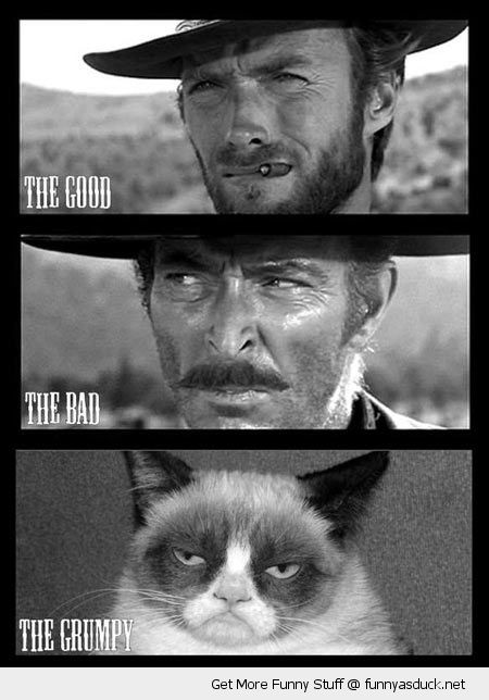 angry cat lolcat animal clint eastwood good bad grumpy western movie grumpy angry cat lolcat animal xmas christmas hat santa paws one more time dare you funny pics pictures pic picture image photo images photos lol