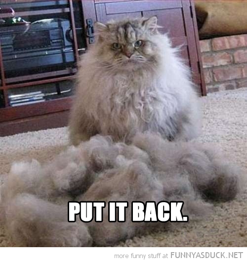 angry grumpy cat lolcat animal fluff hair put it back funny pics pictures pic picture image photo images photos lol