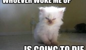 angry grumpy cat kitten animal whoever woke me up going die funny pics pictures pic picture image photo images photos lol