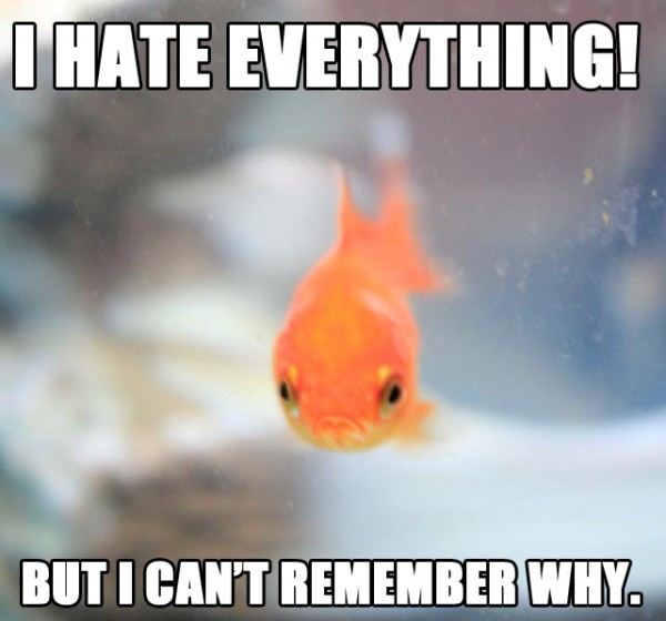 angry grumpy fish aquarium hate everything can't remember why animal funny pics pictures pic picture image photo images photos lol