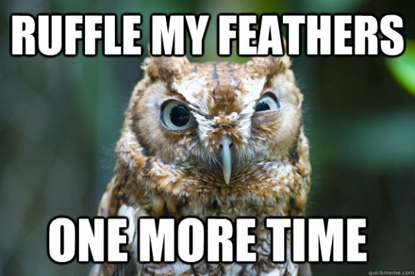 angry baby owl grumpy bird ruffle feathers one more time funny pics pictures pic picture image photo images photos lol