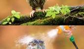 angry owl baby bird soaked sprayed water hose moist owlet funny pics pictures pic picture image photo images photos lol