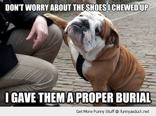 apologetic dog animal paw knee sad dont worry shoes chewed proper burial funny pics pictures pic picture image photo images photos lol