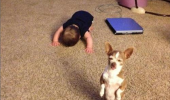 baby kid bowing dog animal please teach me how to stand up funny pics pictures pic picture image photo images photos lol