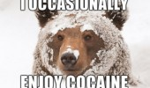bear face covered snow winter animal occasionally enjoy cocaine drugs funny pics pictures pic picture image photo images photos lol