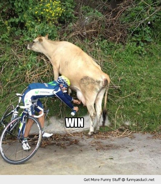 biker cyclist race milking cow animal win bottle funny pics pictures pic picture image photo images photos lol
