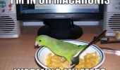 bird budgie animal warming feet bowl food macaroni cute funny pics pictures pic picture image photo images photos lol