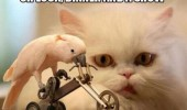 bird animal cockatiel riding bike hungry cat dinner and show funny pics pictures pic picture image photo images photos lol