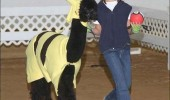 boy dressed ash pokemon llama animal pikachu costume close enough funny pics pictures pic picture image photo images photos lol