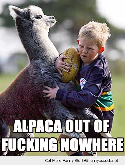 boy kid playing rugby sport talked alpaca out of nowhere animal funny pics pictures pic picture image photo images photos lol