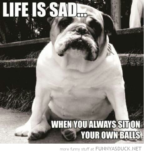 sad depressed bull dog animal life always sit own balls funny pics pictures pic picture image photo images photos lol