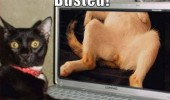 busted cat lolcat animal watching porn laptop computer shocked surprised face funny pics pictures pic picture image photo images photos lol