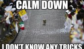 dog animal walking parade crowd calm down dont know tricks funny pics pictures pic picture image photo images photos lol