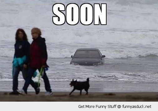 car beach water sea ocean soon couple dog funny pics pictures pic picture image photo images photos lol