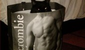 cat lolcat animal bag muscle man yes been working out funny pics pictures pic picture image photo images photos lol