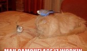 cat lolcat animal bed birds budgies camouflage is working funny pics pictures pic picture image photo images photos lol