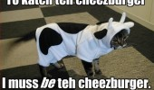 cat lolcat animal cow costume catch be cheeseburger funny pics pictures pic picture image photo images photos lol