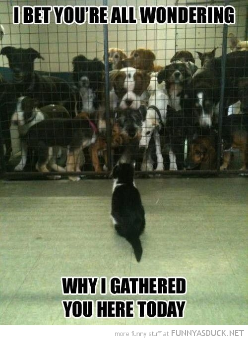 cat dog pound lolcat animal guess wondering why gathered here today meeting funny pics pictures pic picture image photo images photos lol