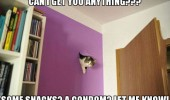 can get you anything snack condom cat lolcat hole wall animal funny pics pictures pic picture image photo images photos lol