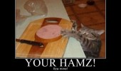 cat lolcat animal stealing food you ham is mine kitchen funny pics pictures pic picture image photo images photos lol