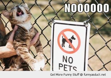 shocked upset cat lolcat animal no pets sign fence crying no funny pics pictures pic picture image photo images photos lol