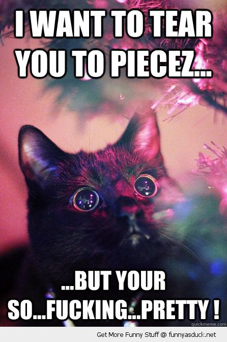 cat animal lolcat staring xmas tree christmas lights decorations want tear pieces so pretty funny pics pictures pic picture image photo images photos lol