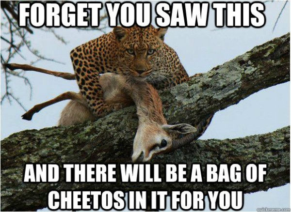 cheetah animal tree prey antelope forget you saw this bag cheetos for you funny pics pictures pic picture image photo images photos lol