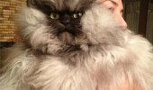 colonel meow meme cat lolcat animal angry grumpy unhand me peasant funny pics pictures pic picture image photo images photos lol