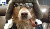 cool suave dog animal sunglasses hat pipe took two bitches party three funny pics pictures pic picture image photo images photos lol