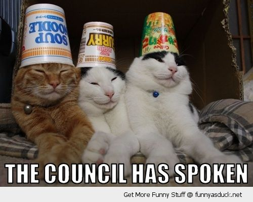 cats animals lolcats cups pots buckets heads council has spoken funny pics pictures pic picture image photo images photos lol