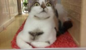 crazy mad insane cat lolcat animal don't tap sign tapped once funny pics pictures pic picture image photo images photos lol