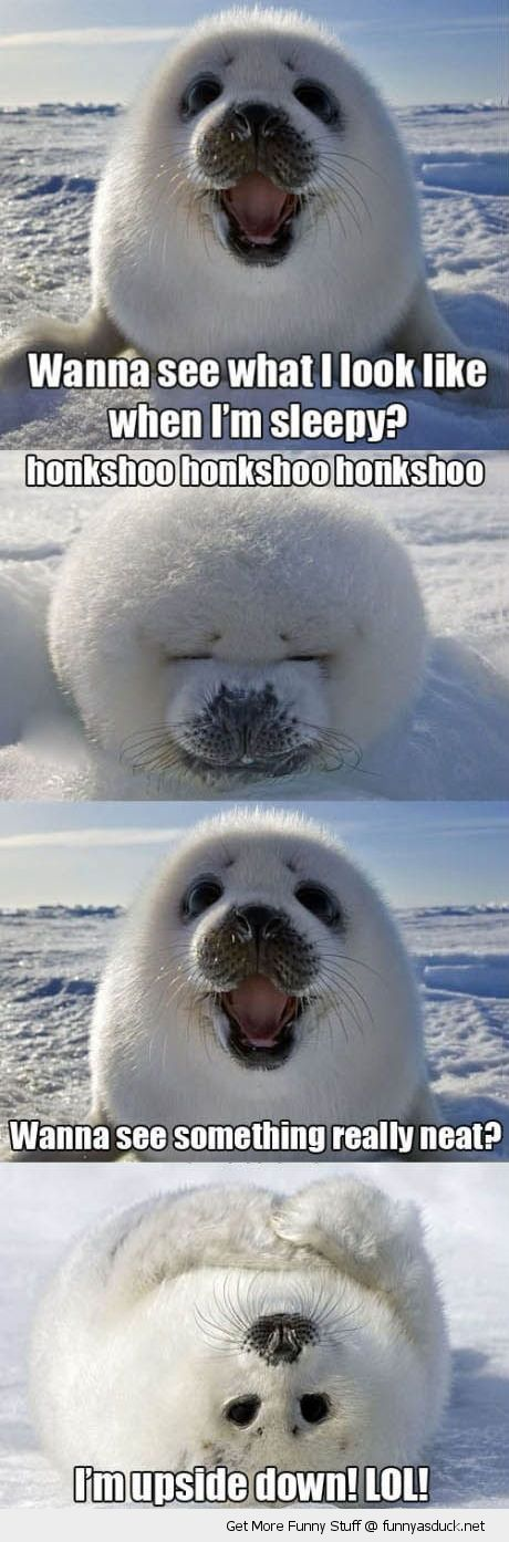 cute baby seal cub animal wanna see me sleeping something neat upside down funny pics pictures pic picture image photo images photos lol