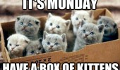 cute cats animals lolcat its monday have box kittens funny pics pictures pic picture image photo images photos lol