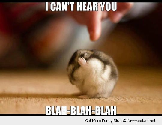 cute hamster paws over ears cant hear you blah animal funny pics pictures pic picture image photo images photos lol