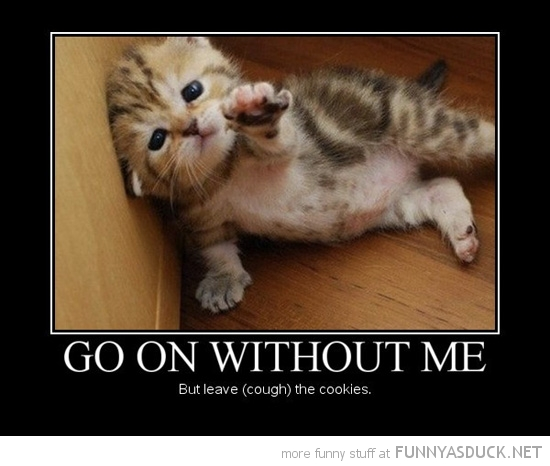 cute cat kitten animal lolcat go on without me leave cookies funny pics pictures pic picture image photo images photos lol