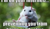 cute hamster mouse animal swing internet preventing you being productive funny pics pictures pic picture image photo images photos lol
