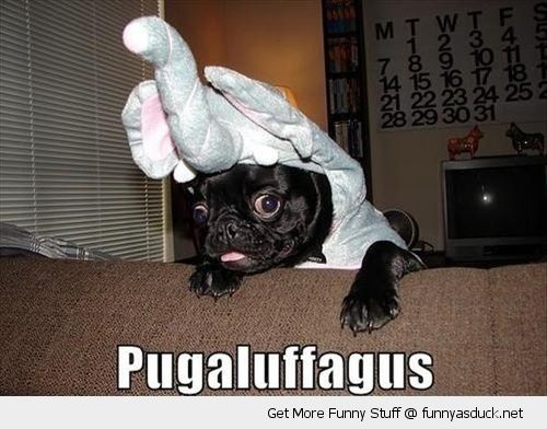 cute dog animal pug elephant hat costume happy couch pugaluffagus funny pics pictures pic picture image photo images photos lol