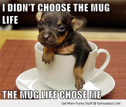 cute baby puppy dog tea cup animal choose mug life chose me funny pics pictures pic picture image photo images photos lol