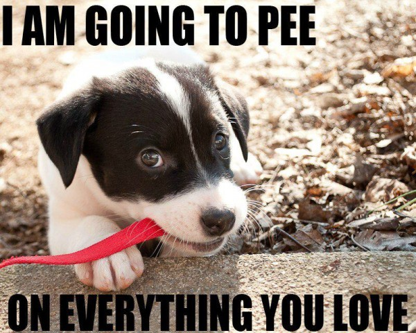 cute puppy dog happy going to pee everything you love animal funny pics pictures pic picture image photo images photos lol
