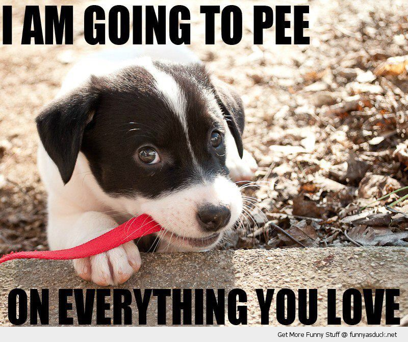 I Am Going To Pee...