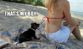 cute puppy dog biting pulling womans bikini strap beach thats my boy animal funny pics pictures pic picture image photo images photos lol