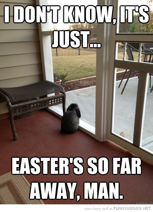 sad depressed bunny rabbit reality window dunno man easter far away animal funny pics pictures pic picture image photo images photos lol